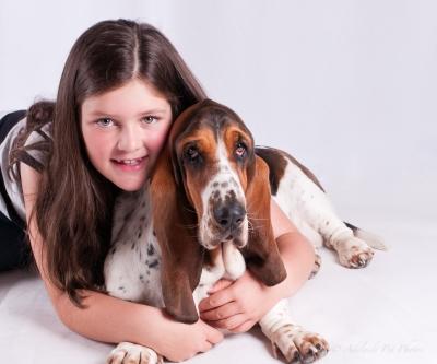 Nellie the Basset Hound pet portrait