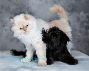 Adelaide Pet Photos