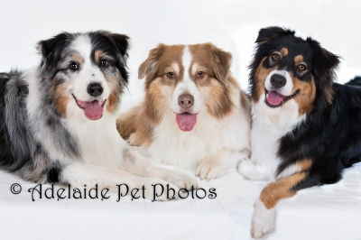 Adelaide Pet Photos